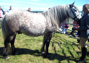 Winning Pony Tiree Agricultural Show